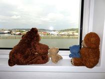 Teddybären in Göteborg von Olga Sander