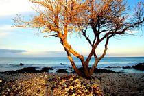 Tree of Mystery von Maria Killinger