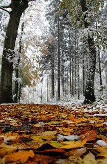 Herbst meets Winter by Bruno Schmidiger
