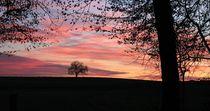 Baum im Himmel von Bruno Schmidiger