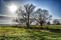 Bäume im Sonnenlicht von Maria Killinger