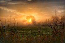 Baum im Licht des Morgens by Maria Killinger