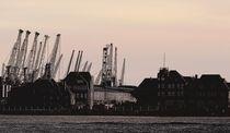 Kräne im Hamburger Hafen von Peter Norden