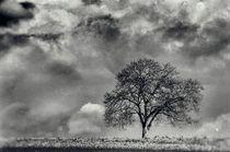 'Der Baum' von Bruno Schmidiger