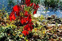 Autumn Spring IV by Maria Killinger