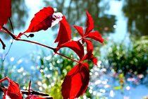 Autumn Spring I by Maria Killinger