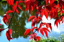 Autumn Spring V by Maria Killinger