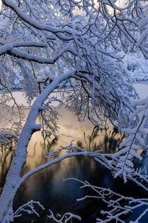 Frozen Branch by Evgeny Govorov