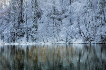 Winter Reflections von Evgeny Govorov