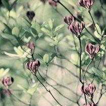 BUKOLISCH von © Ivonne Wentzler