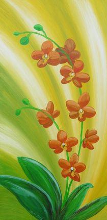 Orchidee im Licht by Barbara Kaiser