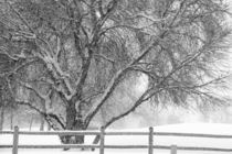 Winter Tree by Engeline Tan
