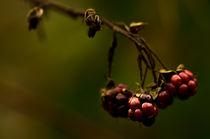 Wild Blackberries by Engeline Tan