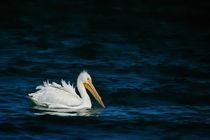White Pelican von Engeline Tan