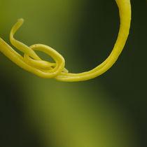 Tying the knot von Engeline Tan
