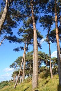 Bäume von Ute Bauduin