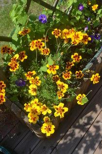 Blumen by Ute Bauduin