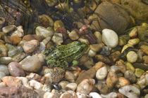 Frosch von Ute Bauduin