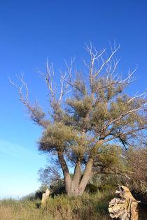 Alter Baum von Ute Bauduin