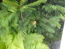Spinnennetz-001