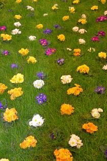 Frühlingswiese von Ute Bauduin