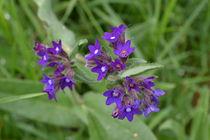 Blumen von Ute Bauduin