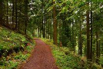 Waldweg von gscheffbuch