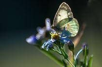 Schmetterling im Sonnenlicht von Marianne Drews