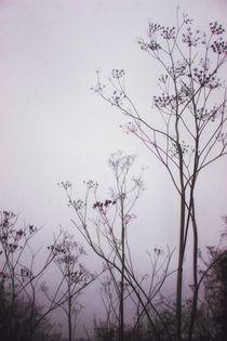 Wildflowers in the Fog von Vicki Field