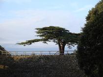 Baum von Ute Bauduin