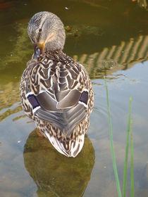 Ente von Ute Bauduin