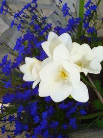 Blüten by Ute Bauduin