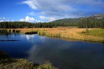 Tranquil Yellowstone   von Aidan Moran