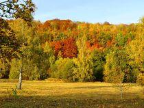 Herbstwald von gscheffbuch