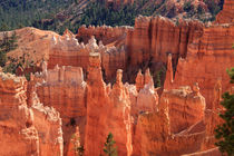 Bryce Canyon Red Rock by Aidan Moran