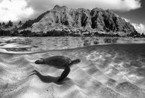 Ridge-turtle