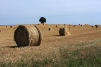 Straw Bale Field by Aidan Moran