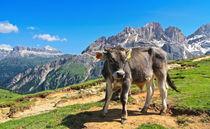 Dolomiti - alpine pasture von Antonio Scarpi