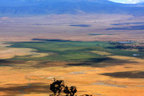 Ngorongoro Crater Tanzania by Aidan Moran