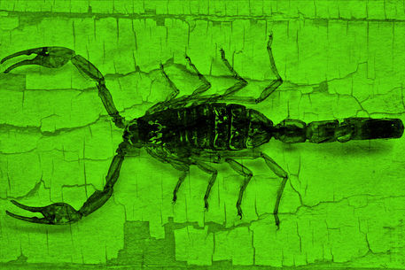 Skorpion-004-6000green