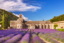 Lavender at Abbaye de Senanque by Sara Winter