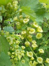 zarte Blüten by Ute Bauduin