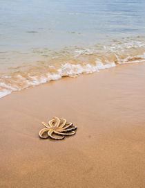 Sonne, Strand und Meer: Seestern von Tobias Koch