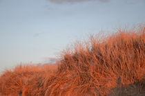 Dünengras von Ute Bauduin