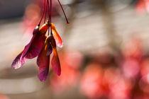 Hanging loose von Engeline Tan
