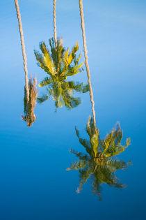 Reflection von Pieter Tel