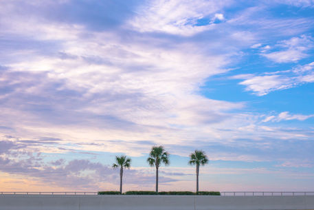 20150111-l1003376-3-palm-trees