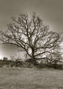 Ziegel am Baum von Jens Hennig