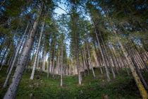Into the Woods von Lukas Kirchgasser