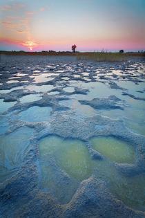 Sonnenuntergang Nationalpark Neusiedler See von Lukas Kirchgasser